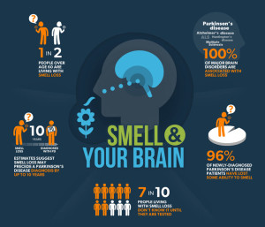 800x800MJFF-Smell-and-Your-Brain-Infographic-7-23-13-5-1